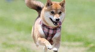 愛犬アルバム