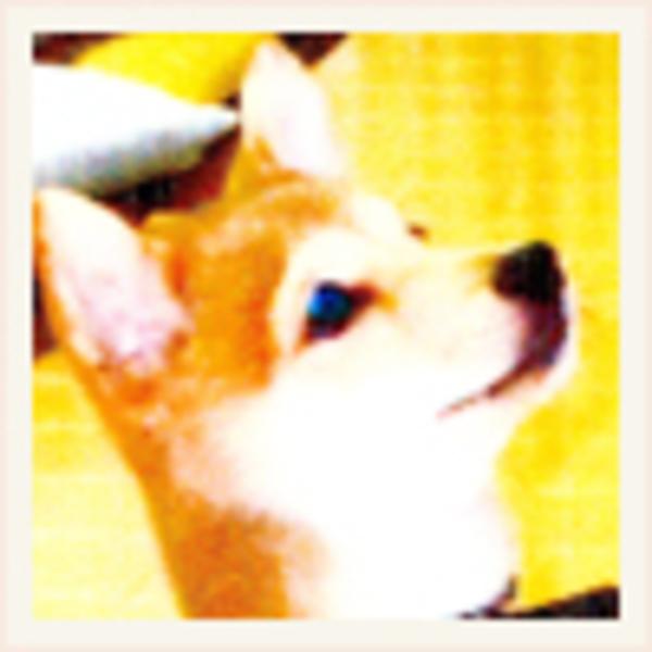 福島県 小竜丸のサムネイル