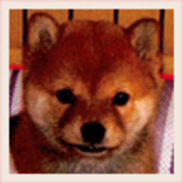 兵庫県 小梅のサムネイル