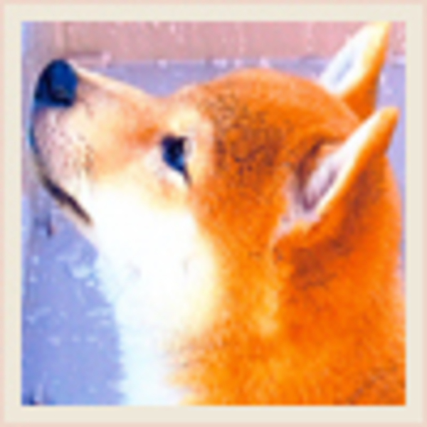 滋賀県 コロのサムネイル