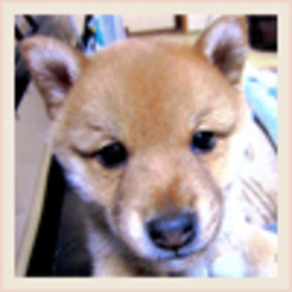 奈良 ポン助のサムネイル