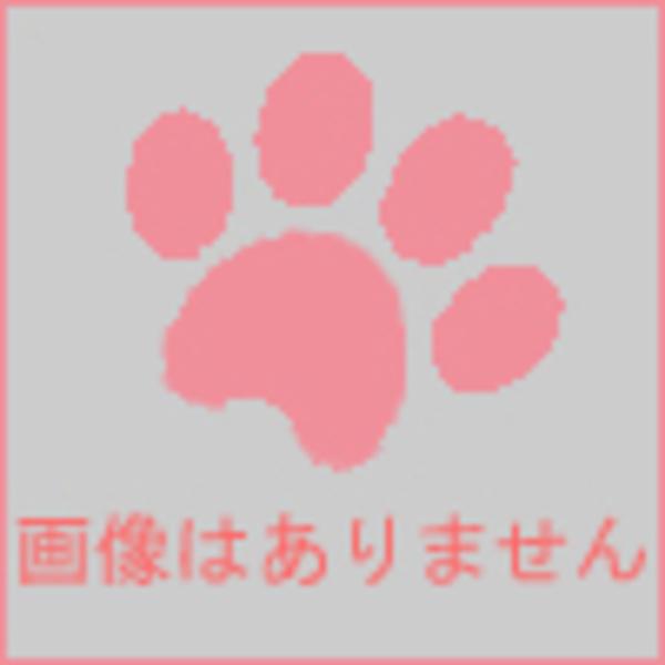 大阪府 ちゃん太