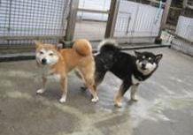 2012年4月23日  兵庫県 ななちゃん♪4歳と8か月^-^のサムネイル