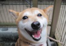 2011年8月24日 石川県 みみたちゃん♪のサムネイル