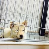 犬をお留守番させるとどんな気持ちになるの?