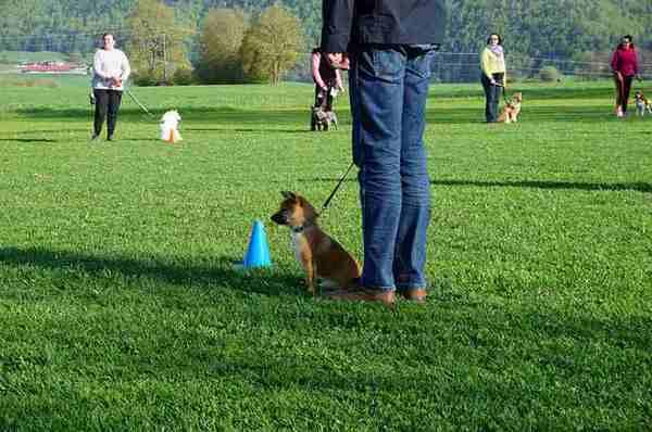 海外で犬を飼うときの注意点!