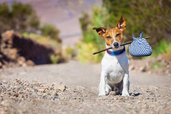 災害に備える!犬の為にできる防災グッスや対策は?