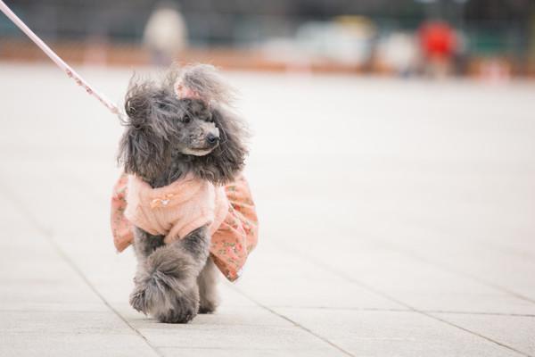 犬のお散歩の目安、犬を飼う前に知っておきたいこと