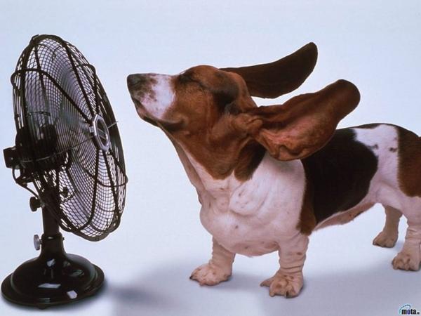 犬の熱中症対策、熱中症の予防
