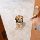 愛犬を友達や両親など知人に預ける時の注意