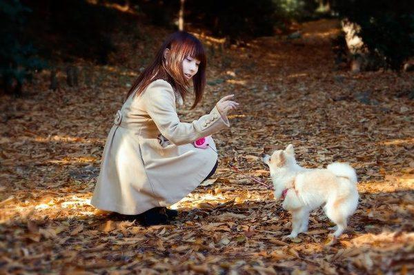犬のお散歩の重要性。意外と知らない散歩の基本