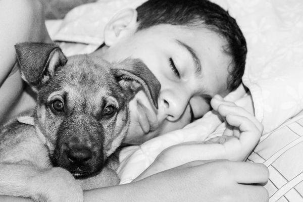 犬が寝るときに寄り添ってくる理由とは