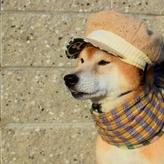 犬に洋服は必要?そのメリットとは