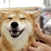 愛犬をマッサージして心身ともにリラックス!至福の時間を