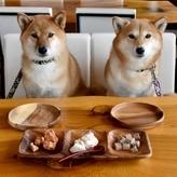 犬が食べると危険な食べ物は!?家の中やお散歩中も気をつけよう