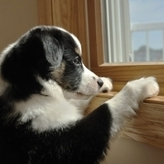 一人暮らしだけど犬を飼いたい!クリアすべき問題とポイントは?