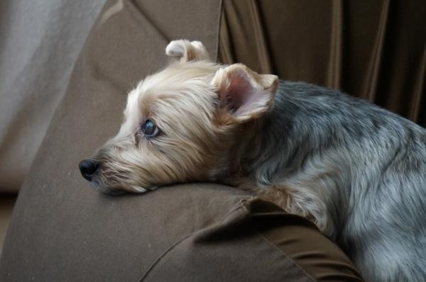 犬をお留守番させる時の対策