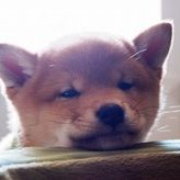 犬をペットホテルに預けるとストレスを感じてしまう?