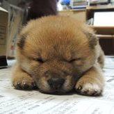 犬のストレスサイン見逃してませんか?愛犬との生活をもっと豊かにしよう!