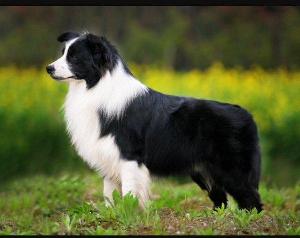 犬はなぜ賢いのか?その理由はちゃんとあります。