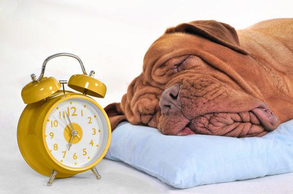 犬の時間間隔を理解し充実な生活を