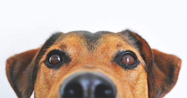 愛犬が飼い主さんから離れないのはなぜ?こんな理由が