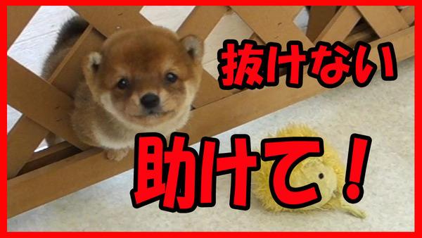 宝山荘の日常動画
