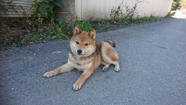 迷い犬保護しました。飼い主見つかりました。