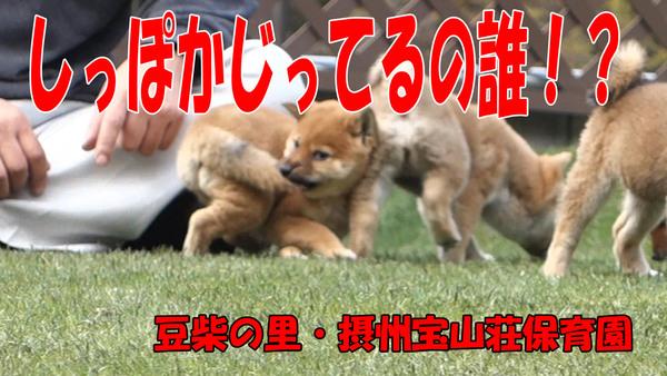 宝山荘保育園 年長組室外編