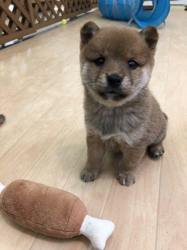 犬の拾い食い、どうすればいい?