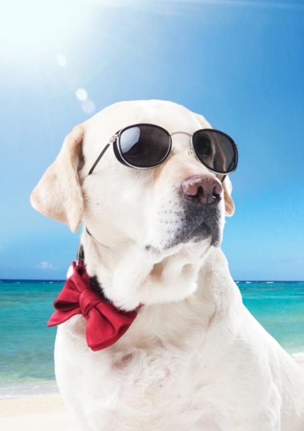 春先に注意!犬にも紫外線手対策が必要。
