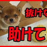 不定期更新 子犬との日常動画