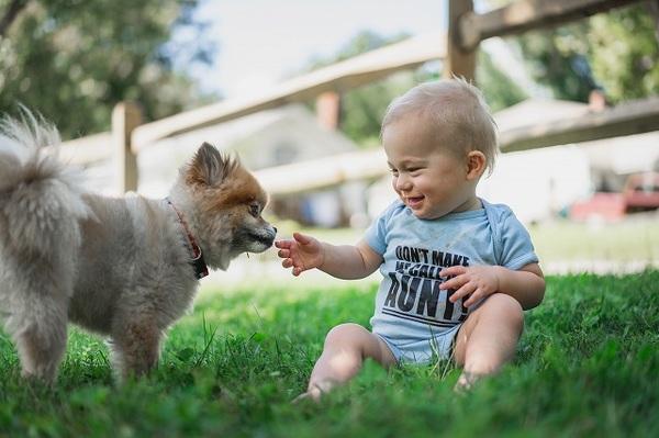 子供ができたら犬を飼え! メリットやデメリット
