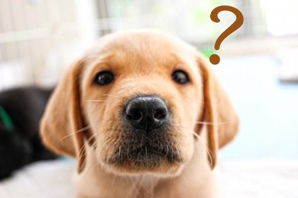 犬の知能 実験結果が面白い 特に優れた能力