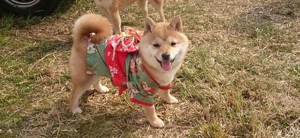 愛犬におしゃれな洋服を着せたい!嫌がるのはどうやって慣れさせる?