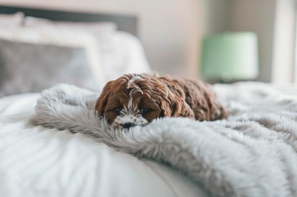 犬の寝る時の姿で本音がわかる!その理由とは