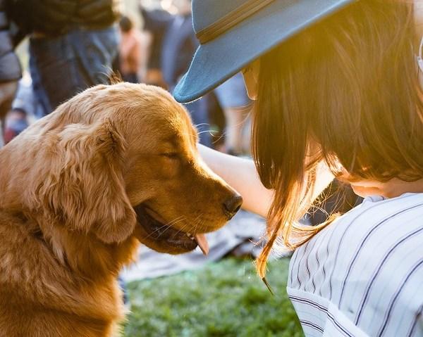 犬を撫でるのはスキンシップの1つ!病気の早期発見にも