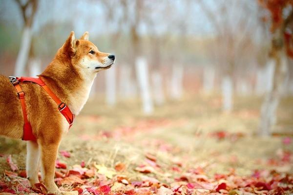 犬も免疫力をアップして、いつまでも元気で長生きさせるコツとは