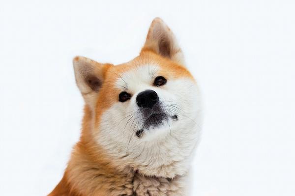 犬の血統書とは?どんなことが書いてあるの?