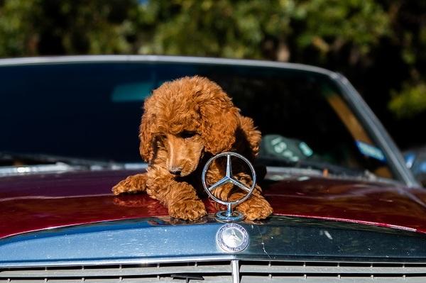 犬とドライブに行く時に注意して欲しいこと!一緒に楽しく思い出つくりを