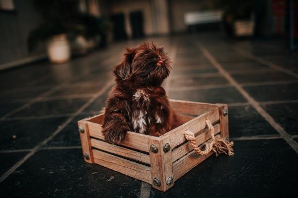 愛犬のクレートを選ぶときの基準とは