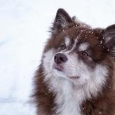 フィンランドは犬を大事にする国!公共機関に一緒に乗ることも