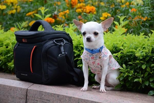 日本で愛犬と一緒に電車でお出かけをするときの注意点