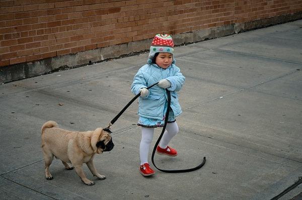 犬がお散歩で飼い主さんを引っ張る原因や対策