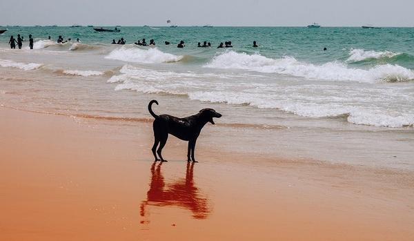 愛犬と沖縄に移住したい!注意点や気を付けてほしい事