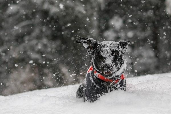 愛犬と雪遊びをするときに注意しなくてはいけないこと