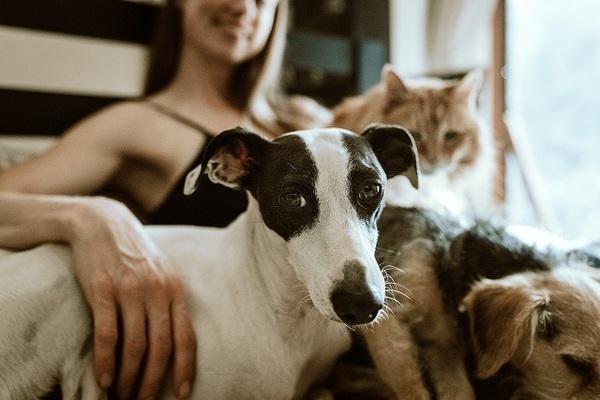 犬は嫉妬深い生き物?ヤキモチを妬いているときの対処法