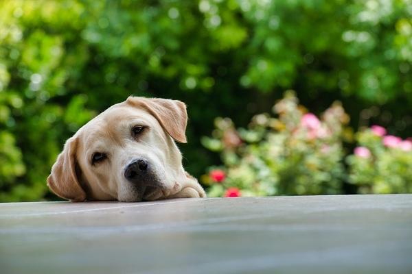 犬の時間感覚を理解してもっと毎日の生活を充実させよう