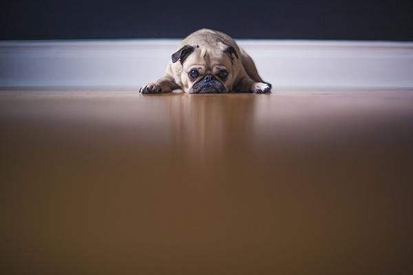 犬が子どもにヤキモチをやいてしまう…どうしたらいいの?