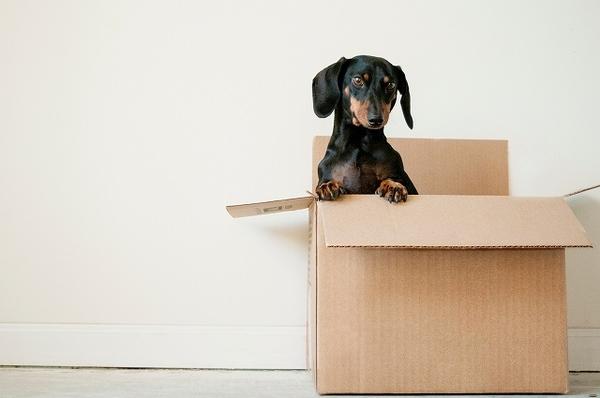 引っ越しした後に犬の負担を減らす為に覚えておいてほしいこと